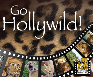 Hollywild.com