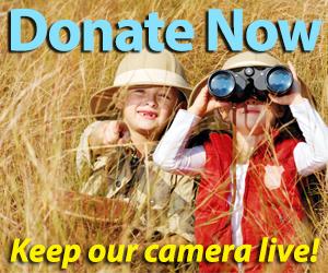 Keep our camera live!