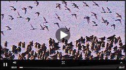 Brownsea Lagoon Webcam