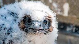 EarthCam: Falcon Cam - Macomb County, MI
