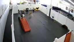 Happy Hound Dog Resorts Dog Daycare