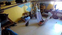 Saaremaa Island Cat Shelter