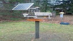 Pierson Place Amateur Avian Research