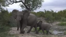 Live African Safari - South Africa