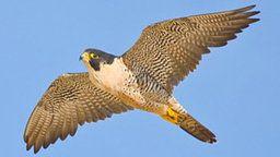 EarthCam: Falcon Cam - Rochester, MN