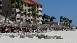 Aruba Cam - Druif Beach