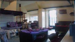 Cat Shelter Cam HD
