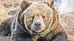 EarthCam: Montana Bear Cam