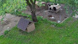 Outside Dog Shelter