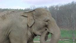 The Elephant Sanctuary