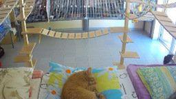 Latvian Cat Shelter