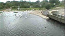 Slimbridge Bewick's Swans Camera