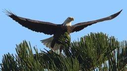 Eagle Cam - Marco Island, FL