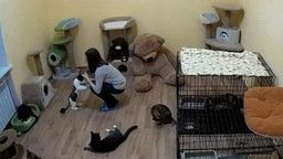 Russian Cat Foster Home