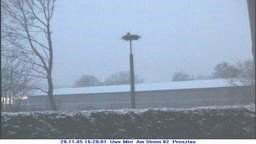 Stork Webcam