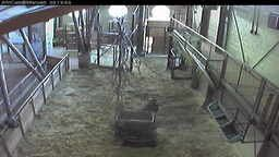 Marwell Zoo Cams
