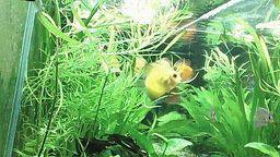 LIVE Planted Discus Aquarium