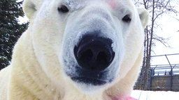 Polar Bear Cams - Viewing Center