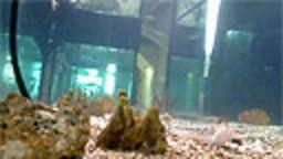 Aquarium Pula - Fort Verudela