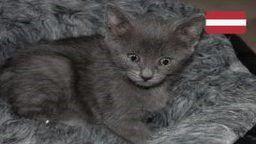 Cute Kittens Live Cam