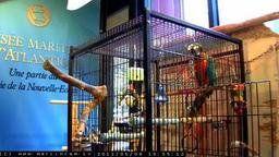 Merlin The Talking Parrot