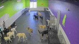 Dogtopia of Bloomfield Dog Day Care