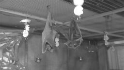 Fruit Bat Conservation Cam