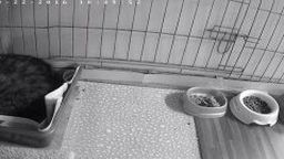 Cat Cage Webcam