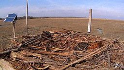 Conserve Wildlife Foundation Osprey Cam