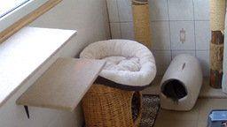Kurilian Bobtail Nursery Webcam