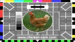 ChickenCam