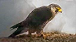 EarthCam: Falcon Cam - Waukegan, IL