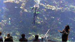 Philippine Coral Reef Cam