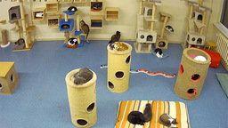 Pesaleidja Animal Shelter