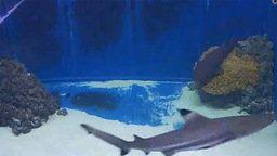 Pula Aquarium - Shark Tank