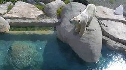 Polar Bear Cams - Habitat 1