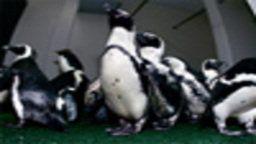 Monterey Bay Aquarium Cam