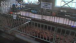 Tokai University Milking Barn