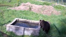 Bear Pool Webcam
