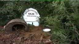 Shubenacadie Sam the Groundhog