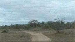 WildEarth.TV