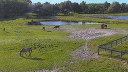 University of Florida Cams - Horse Teaching Unit