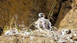 Yaquina Lighthouse Cam - Bird Nest View