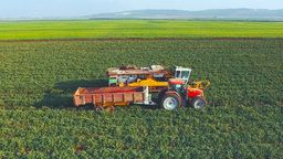 EarthCam: Israel Farm Cam
