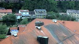 Tirschenreuth: Stork Cam