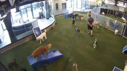 Webcam at DogPark - Sector 1