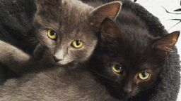 EarthCam: Kitten Cam - Macomb County, MI