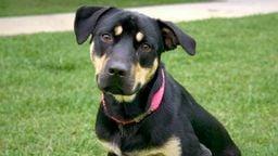 EarthCam: Puppy Cam