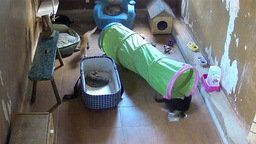 Cats Shelter in Daugavpils, Latvia