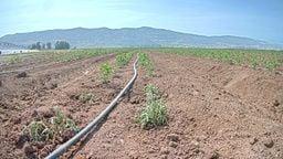 Tomato Farm Cams - Crops View